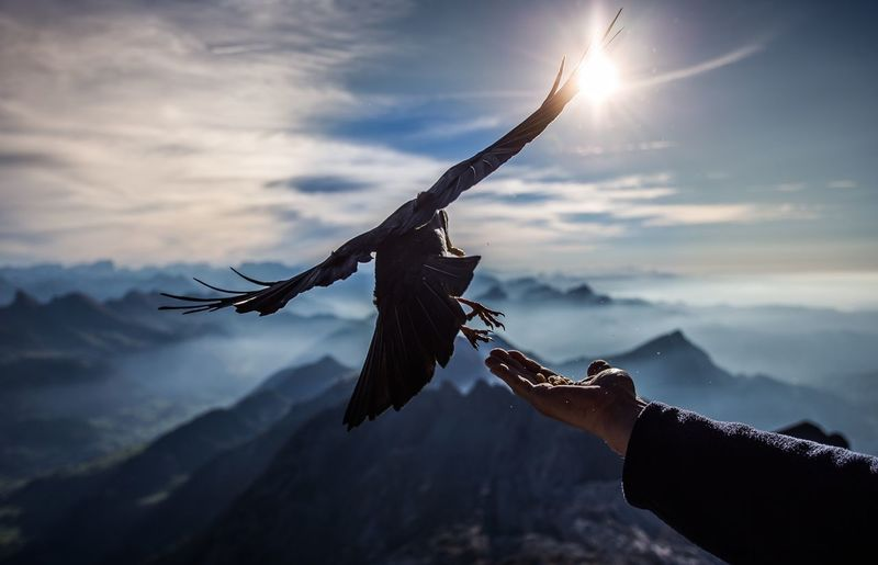 Close-up of hand holding food by bird flying over mountain against sky