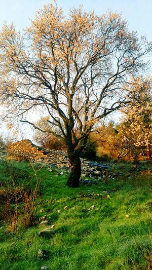 Wildlife Enjoying Life Tree And Sky