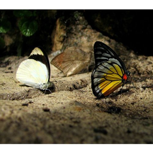 There are 3 Butterflies . Find the 3rd!!! Beautiful Natureaddict Nature Natgeo Ig_naturelover Iran_best_pics Igers Ig_captures_creative Insta_mazing Ig_masterpiece Igersmasterclass