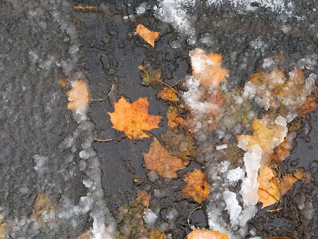 Autumn Remains Cold Temperature Colors In The Snow Day Filled With Snow First Snow First Snowfall Ice Icy Nature No People Outdoors Snowfall Stuck In Snow White Color White Everywhere Winter Arrives Winter Arriving Wintertime