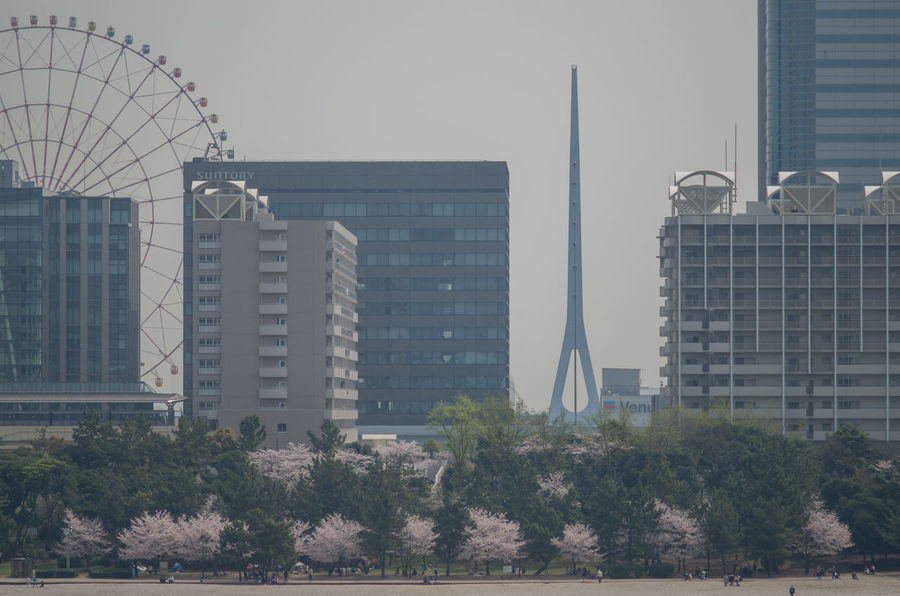 Architecture Building Exterior Built Structure Capital Cities  City City Life Day Ferris Wheel Growth Modern Observation Wheel Office Building Outdoors Sakura Tall Tall - High Tokyo Travel Destinations Tree