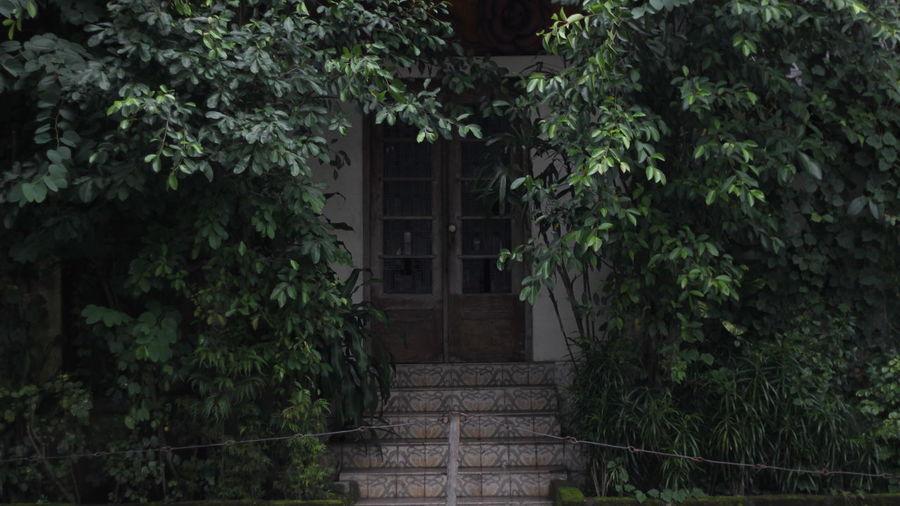 Haunted door, Malang 2017 Door Doorway Street House Home Darkdoorway Dark Door Scary Doors Scary Haunted House Haunted Door Plant Door Around Tree Building Exterior Tree Outdoors Day Nature Entrance