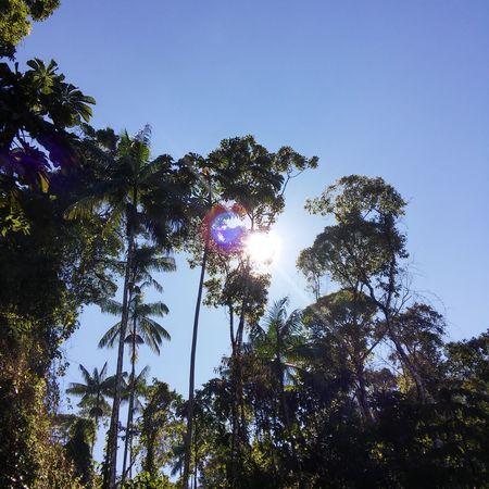 Itatiaia Beauty In Nature Brasil Clear Sky Day Itatiaianationalpark Low Angle View Nature No People Outdoors Sky Sun Sunlight Tranquility Tree