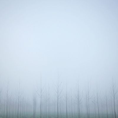 Pianura No People Grey Outdoors Wet Daylight Blackandwhite Countryside Tree Minimalism Fog In The Trees Fog Pianurapadana