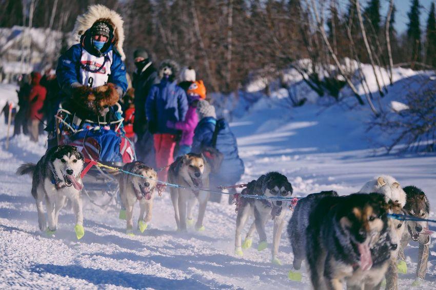 2017 Iditarod Fairbanks Alaska