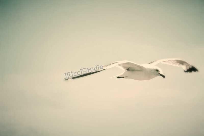 JricciStudios Bird Watching Bird Photography