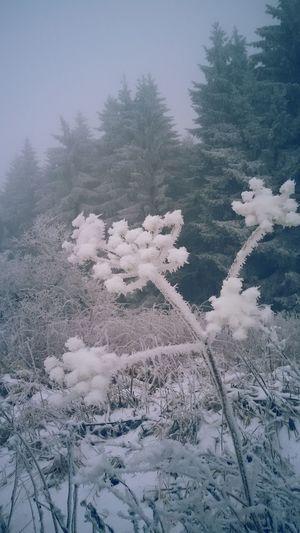 Hoher Meißner im Winter