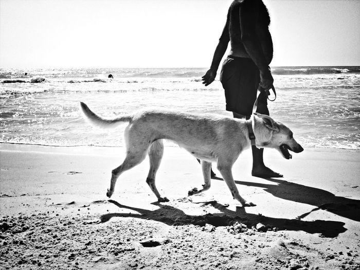 Dog Walking Beachphotography Pets