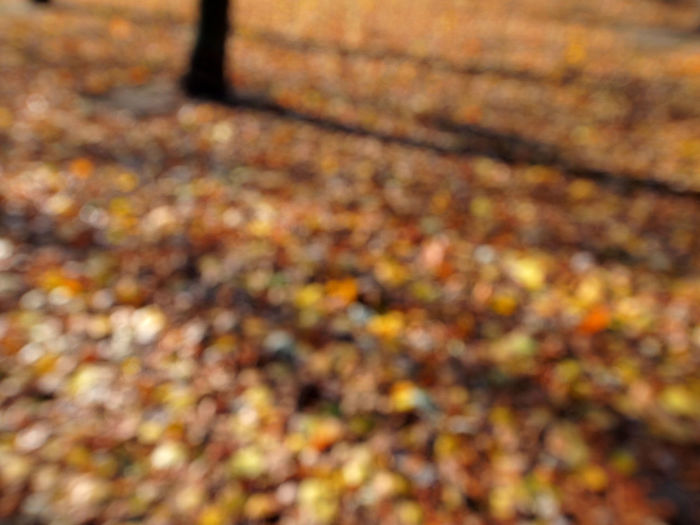 Autumn Autumn Backgrounds Beauty In Nature Berlin Close-up Day Defocused Fine Art Photography Leaf Leafs Nature No People Outdoors Wolskartin