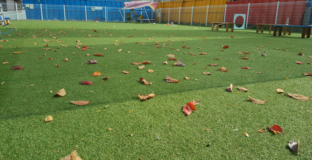 Relax Playground Landscape Leaf Peaceful Photo Green Green Green Green!  For Dogs Kids Korea My Side Job
