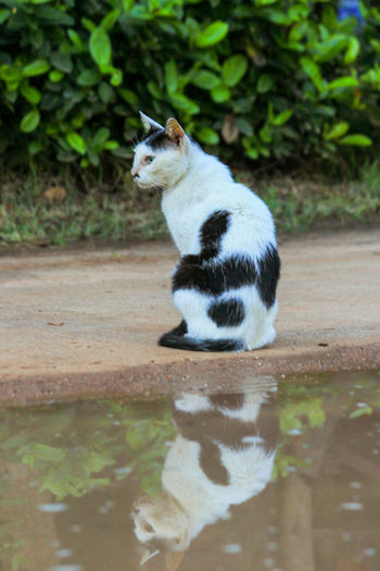 Animal Animal Themes Cat Day Domestic Domestic Animals Domestic Cat Feline Looking Mammal Nature No People One Animal Pets Plant Reflection Sitting Vertebrate Water Whisker
