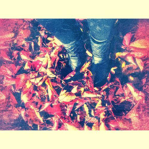 Fall in NorCal