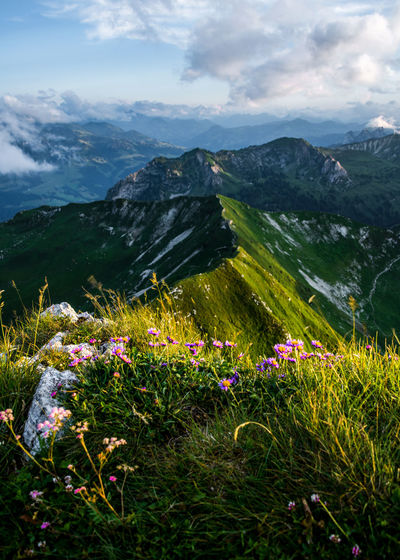 Scenic view of grassy field by mountains against sky