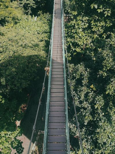 High angle view of footbridge amidst trees in forest