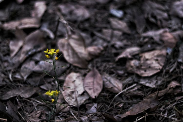 Flower Fragility Nature No People Day Growth Petal