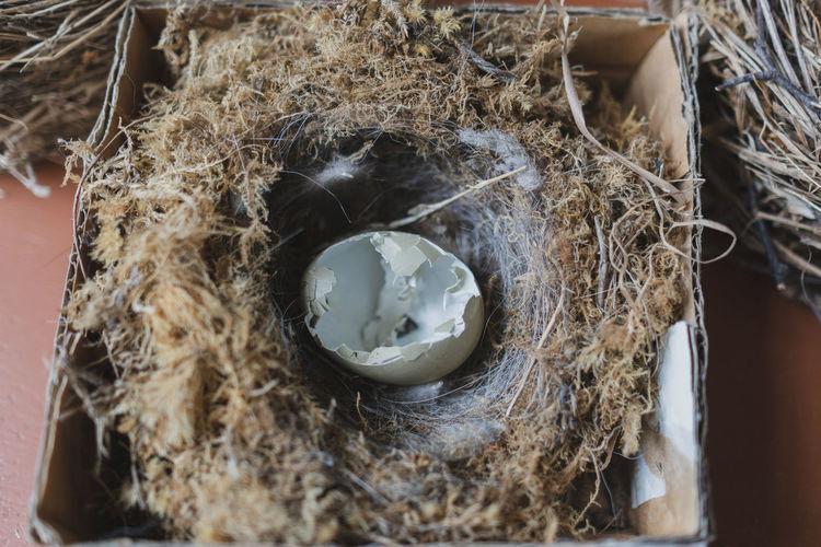 Bird Nest Egg