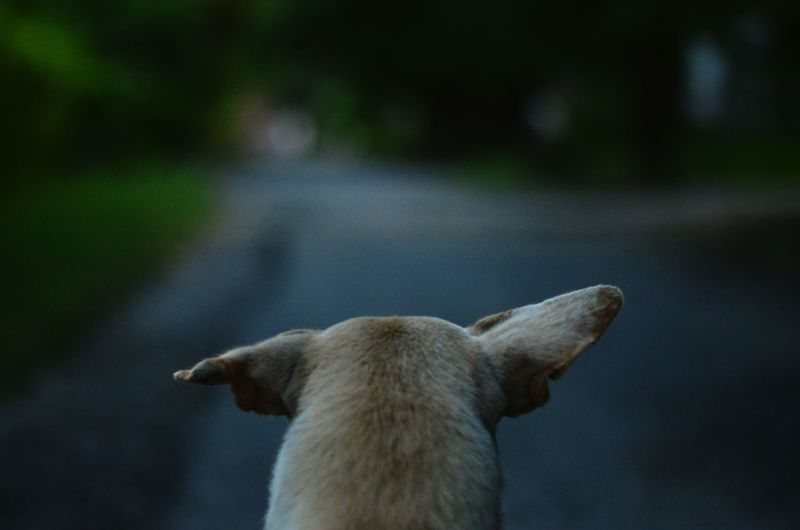 Rear view of dog on street