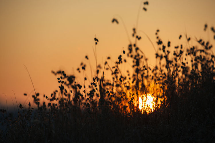 Close-up of plants against sunset sky