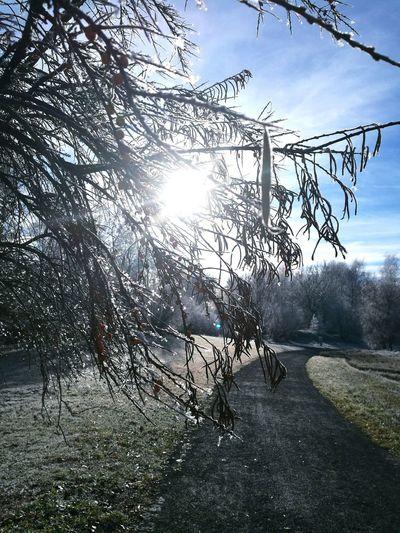 Winter Cold Ice Kalt Kälte Landscape Lanfschaft Weg Way Sonne Sonnenstrahlen Sun Tree Sunlight No People Sky Nature Outdoors Beauty In Nature Branch Day Close-up
