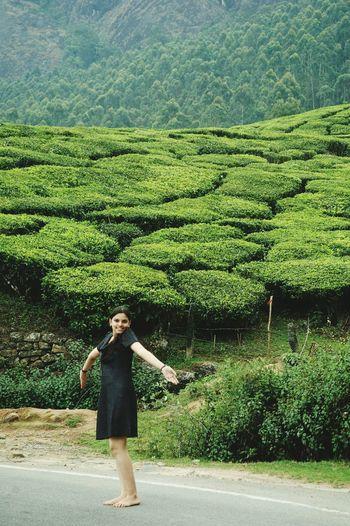 Spring Into Spring Fresh Tea Garden Tea Plantation  Munnar