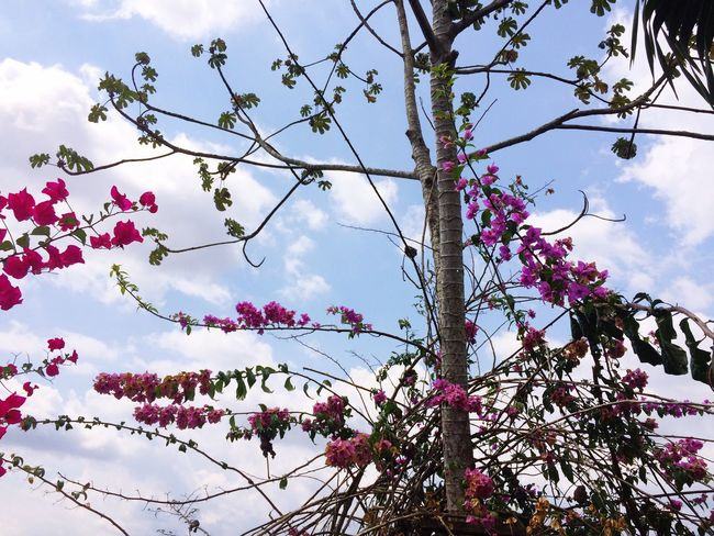 Growth Nature Tree Beauty In Nature Flower Low Angle View Sky Branch Freshness Springtime Fragility Pink Color Blossom No People Outdoors Day Scenics Close-up