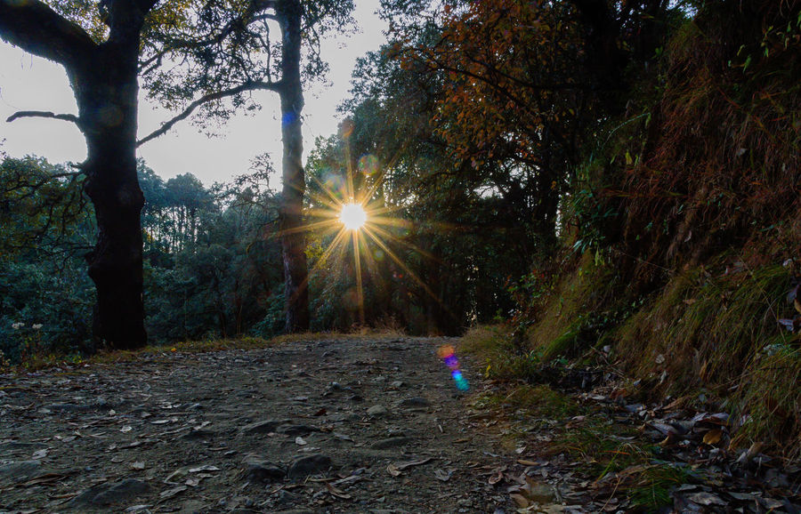 forest walk EyeEmNewHere Autumn Beauty In Nature Binsar Binsar Forest Day Forest Forest Photography Forestwalk Growth Indiapictures Land Lens Flare Nature Non-urban Scene Outdoors Scenics - Nature Sunbeam Sunlight Sunstar Tranquil Scene Tranquility Tree Tree Trunk Uttarakhand