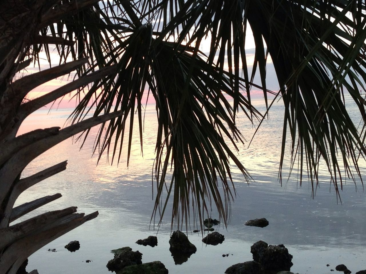 Silhouette Palm Leaves Over Sea During Sunset