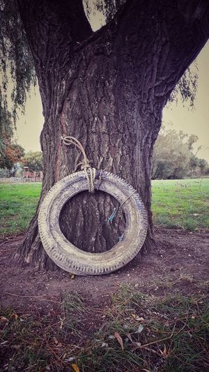 Broken. Vintage Treeswing Tyre Tyreswing Swing Tree Green Beautiful EyeEmNewHere Streetphotography Beauty In Nature Funky Forest Trees Street Natural Low Section Men Human Leg Tree Grass Sky Close-up Woods Rope Swing Playground Tree Trunk