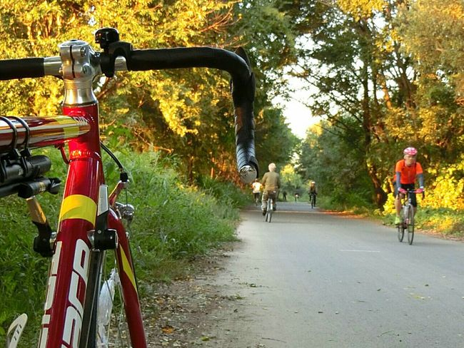 Bicycle Bicycleride 淀川枚方 Autumn Cycling Cycling Around Roadbike Roadbikelife