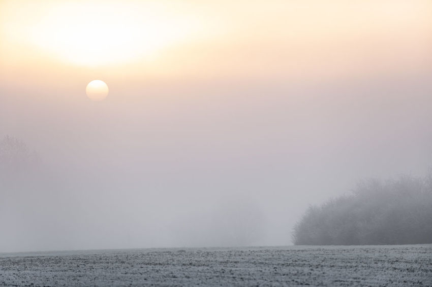 Fog Scenics - Nature Tranquility Beauty In Nature Sky Tranquil Scene Tree Nature Sun No People Plant Idyllic Non-urban Scene Environment Outdoors White Frost