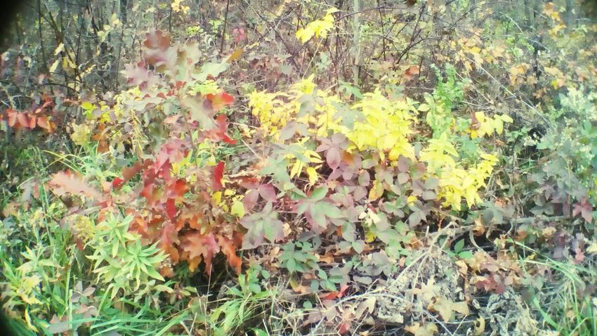 Plant Beauty In Nature Outdoors Nature Fall Colors Rural Scene