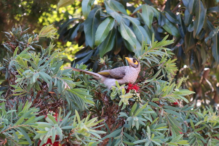 Bird Plant