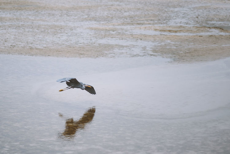 Bird Flying Over Lake During Winter