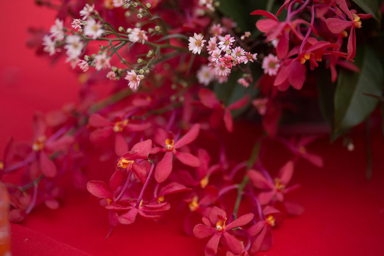 flower on red