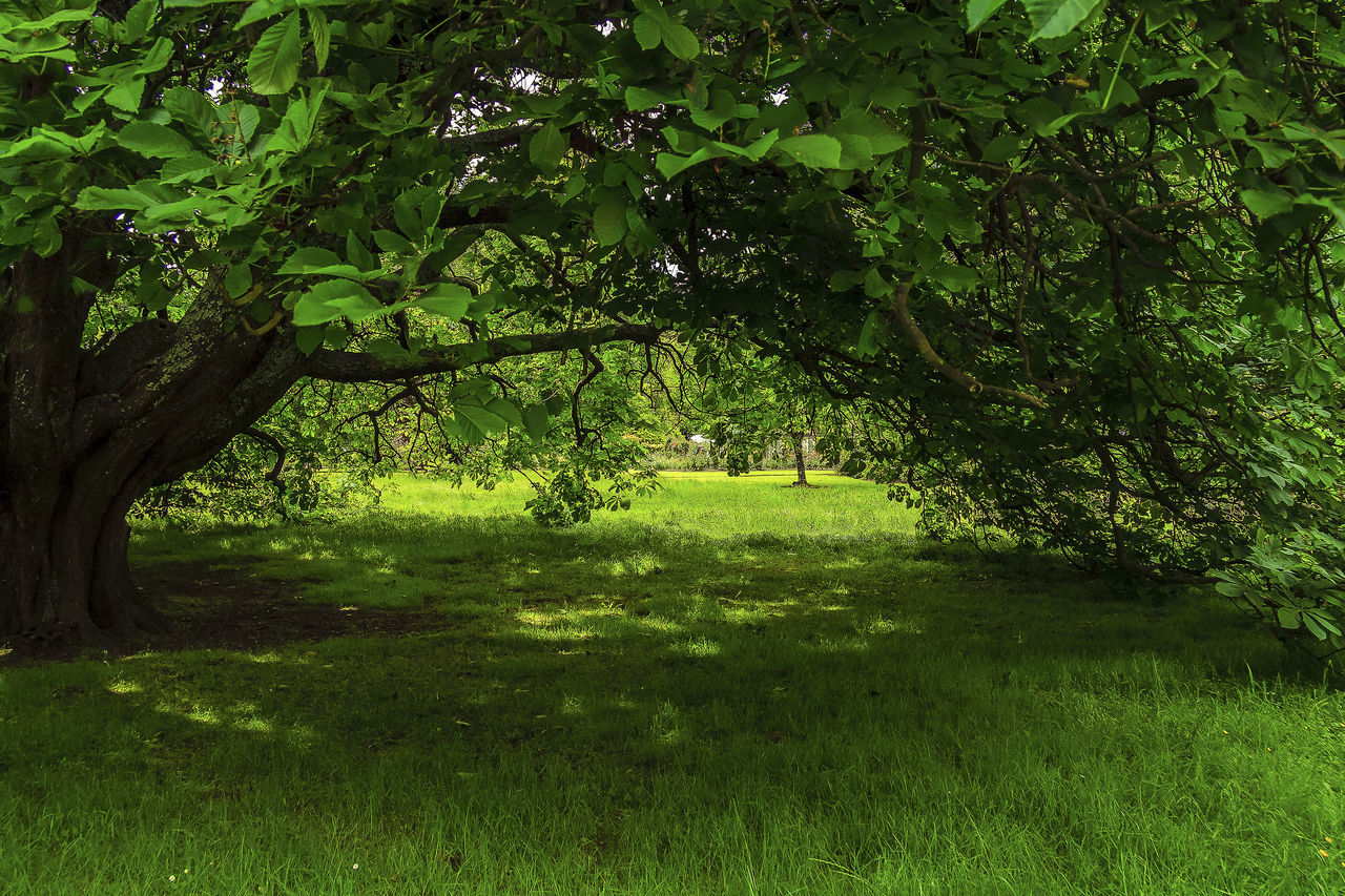 tree, grass, nature, tranquility, growth, green color, tranquil scene, beauty in nature, scenics, landscape, no people, day, field, outdoors, branch