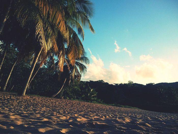 Si vous vous demandez ou passer vos prochaines vacance, ne réfléchissez plus! Allez en Guadeloupe Guadeloupe Beach Beautiful First Eyeem Photo
