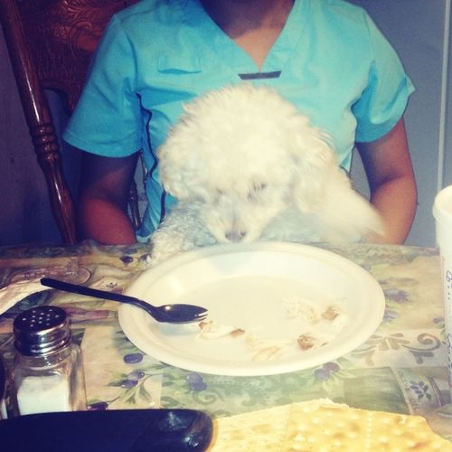 My puppy trying to figure out, how to use a spoon!..