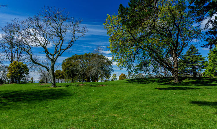 Cornwall Park. Auckland, New Zealand. Auckland Bare Tree Beauty In Nature Blue Cloud Cornwallpark Day Field Grass Green Growth Idyllic Landscape Lawn Nature Newzealand No People Non-urban Scene Outdoors Remote Sky The Essence Of Summer Tranquil Scene Tranquility Tree