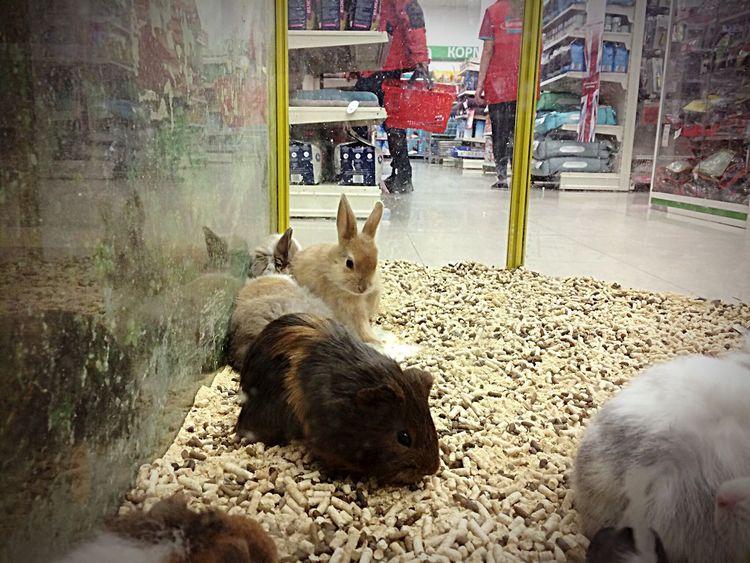 Animal Themes Domestic Animals Rabbits Zoo Shop