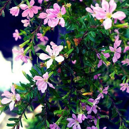 I love flowers ♡ Flowers Green Colors Pink Taking Photos Hello World Enjoying Life Hi! Montevideo Uruguay