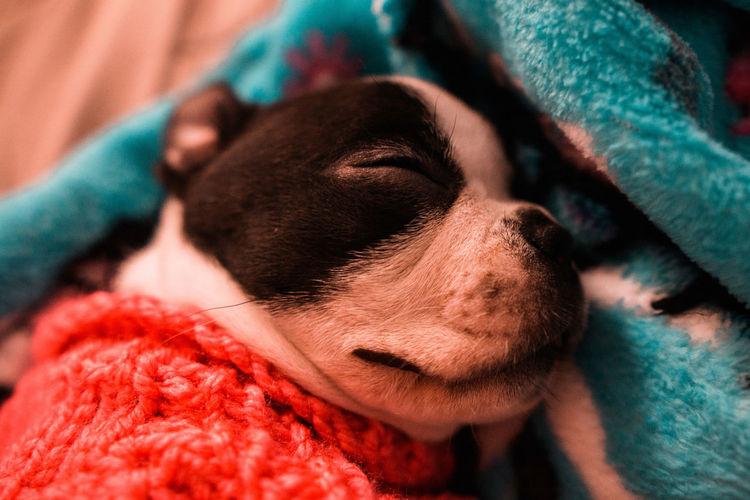 Close-up of dog sleeping on blanket