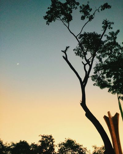Dark nights, bright days ! Nature Sunset Night And Day Tree Silhouette Outdoors Nature No People Sky Beauty In Nature Growth Day Low Angle View Tree Trunk Branch Clear Sky Scenics first eyeem photo Be. Ready.