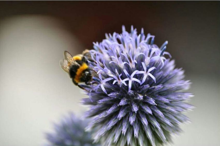 Flowers,Plants & Garden Insects  Nature On Your Doorstep Flowers, Nature And Beauty Bees Flower Wildlife Nature Beesofeyeem