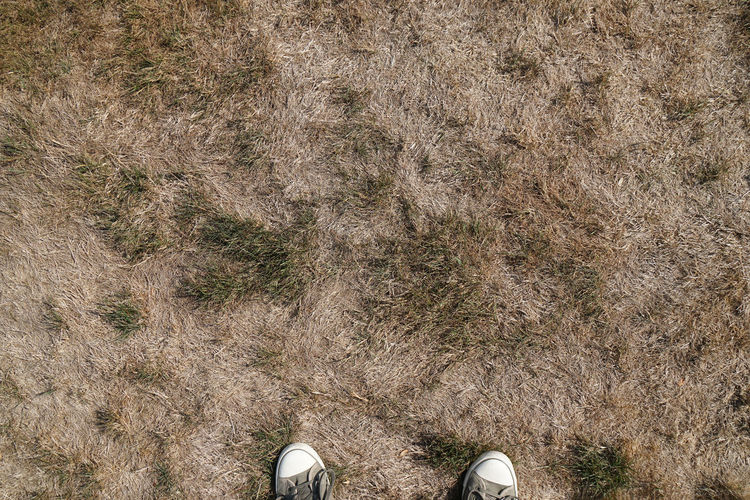 Low Section Of Person Standing On Field
