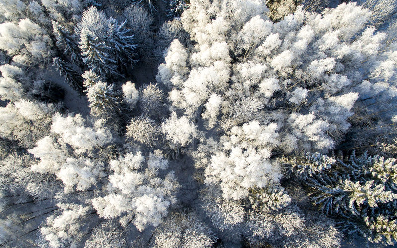 High angle view of snow covered plants on field
