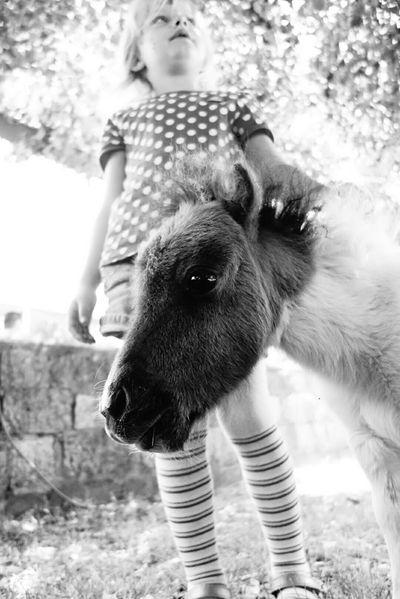 I Love Horses Enjoying Life Eyemphotography Walking Around Kidsphotography Perspectives Schwarz & Weiß EyeEm Best Shots Kids Black And White Photography