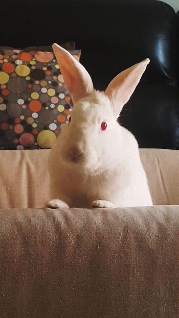 #mybunnyGuinho #bunnyhouse #Brazil #São Paulo Pets Portrait Close-up