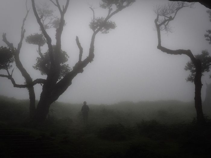 Silhouette trees on landscape against sky during foggy weather