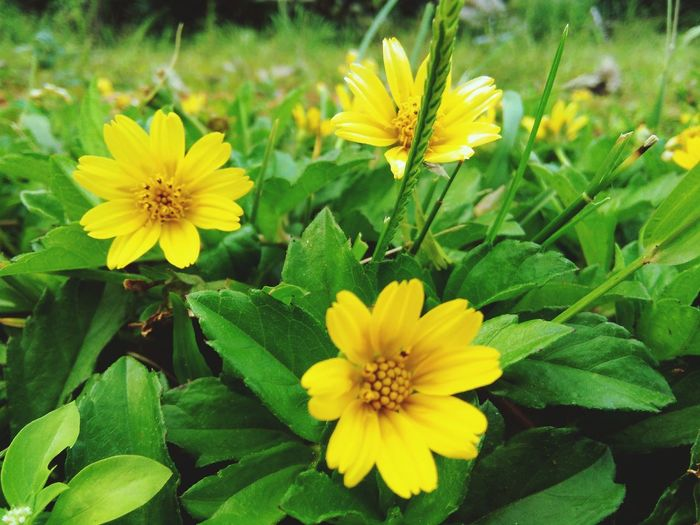 Flowers Yellow Colour Greenery Nature Photography Green Color Daytime Nature Beautifulinnature Naturalbeauty Photography Landscape