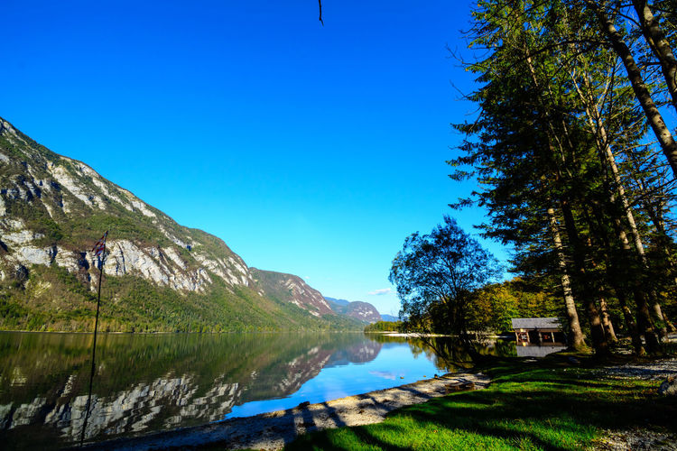 Nature Sky Day Bohinjsko Jezero Tree Plant Water Blue Scenics - Nature Beauty In Nature Tranquility Mountain Tranquil Scene Clear Sky Lake Reflection No People Grass Landscape Green Color Outdoors